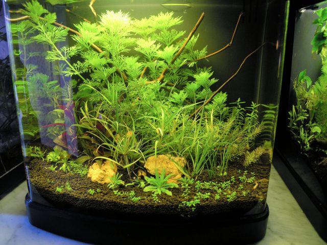 Haqos Nano biljni akvarij