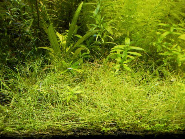 Anti Aquascape akvarij 1.9.2012