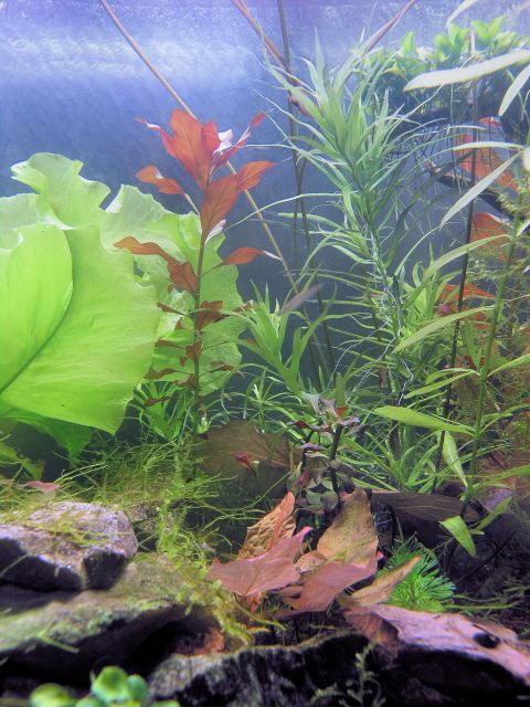Testiranje medija protiv alga