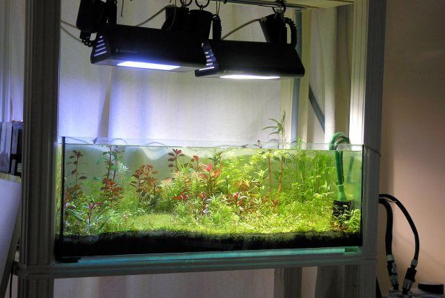 Plant Substrat