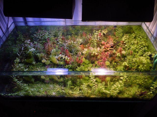 Testiranje plant substrata 2.2013