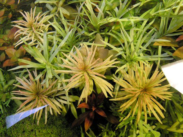 Testiranje plant substrata 14.04.2012