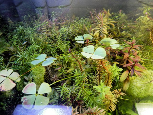 Anti Aquascape akvarij 1.9.2012