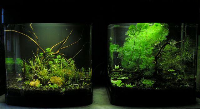 Haqos Nano De luxe akvarij