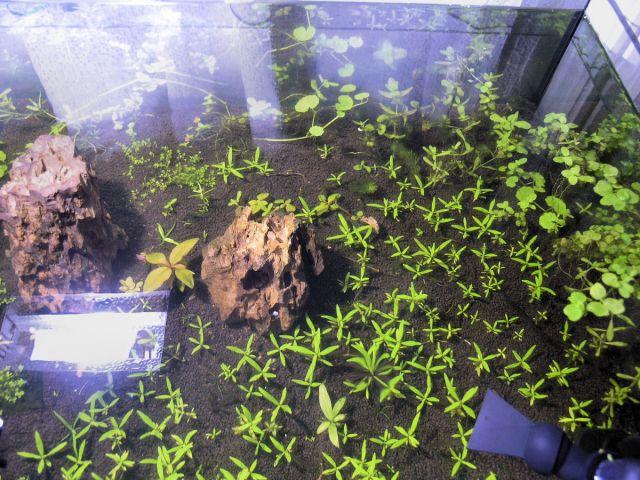 Testiranje Plant Substrata 5.12.2011
