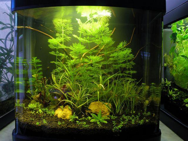 Haqos De Luxe 7 Nano akvarij
