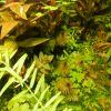 Anti AquaScape akvarij