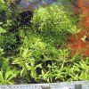 Testiranje Plant Substrate 17.01.2012