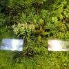 Testiranje Plant substrata 30.03.2012