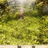 Testiranje Plant Substrata