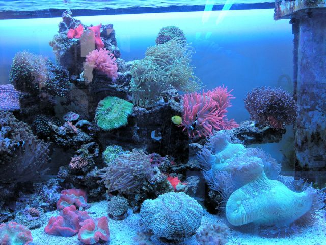 ER 110 reef akvarij