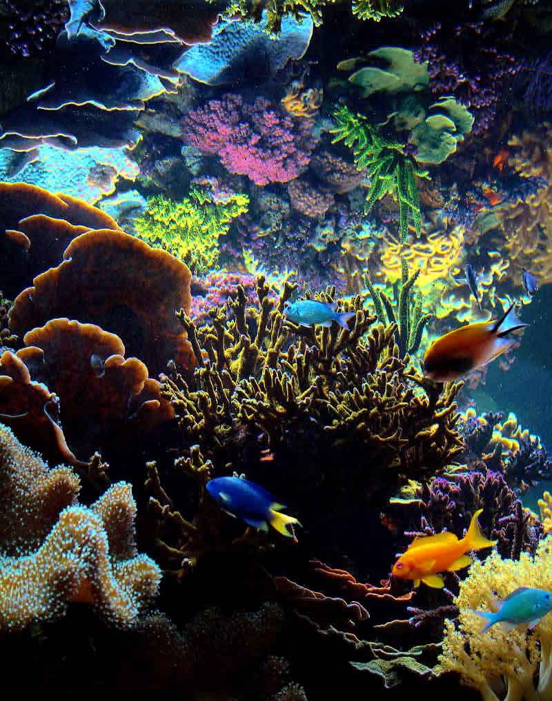 Instant Ocean Reef Crystals : Elegancereef on line magazine des ong ecosystem